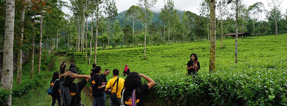 tea plantation in wonosobo central java