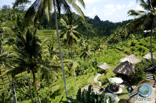 15 things to do in bali for first timers for Tegalalang rice terrace ubud