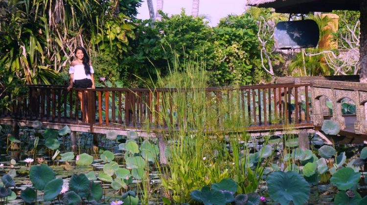 Lotus pond near the villa of Tugu Bali