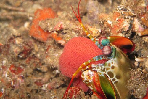 diving in bunaken indonesia