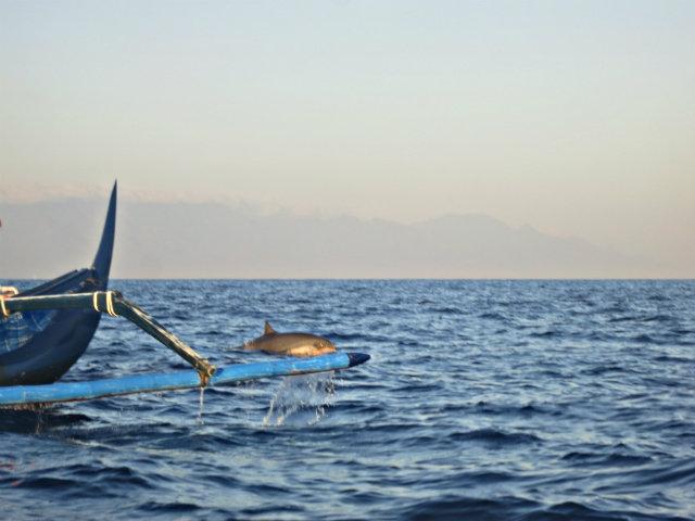 watch dolphins tour lovina