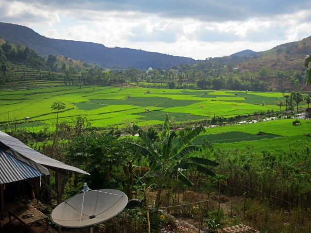 sape indonesia