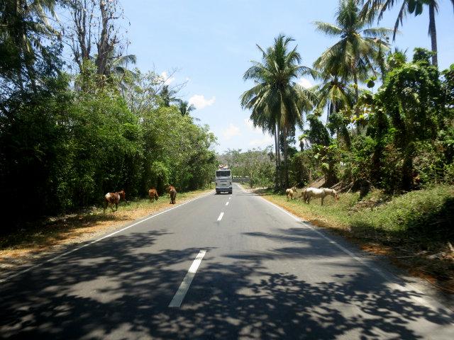 sumbawa road (2)