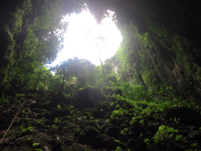ancient forest jomblang cave indonesia