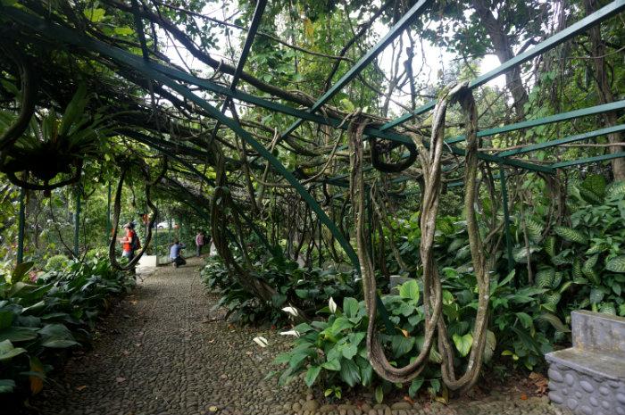 day trip to bogor kebun raya