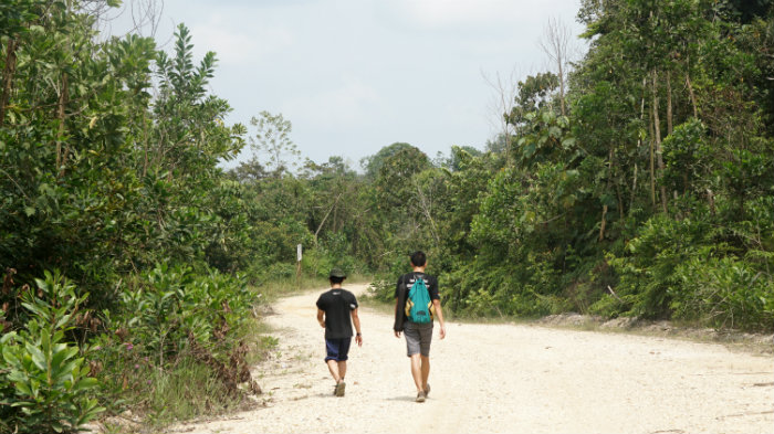 Tesso Nilo National Park Riau