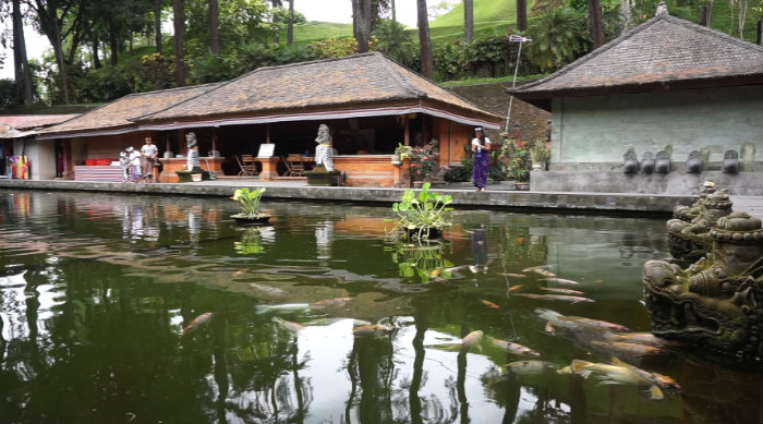 The pond is full of fat fish waiting for their next meal from the tourists.