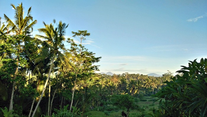 View from my villa Ubud