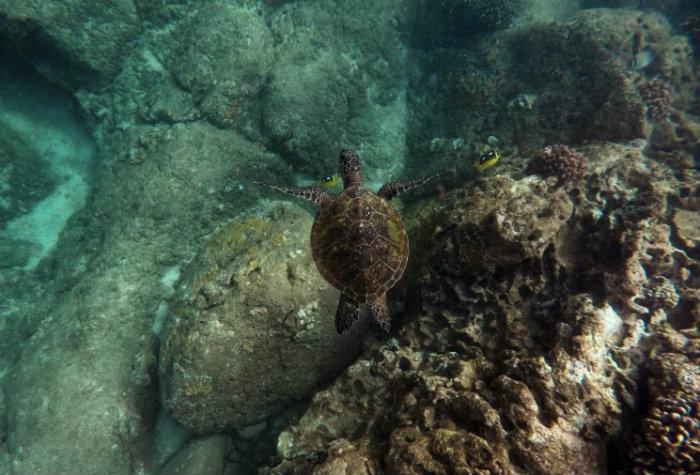 diving-around-batam
